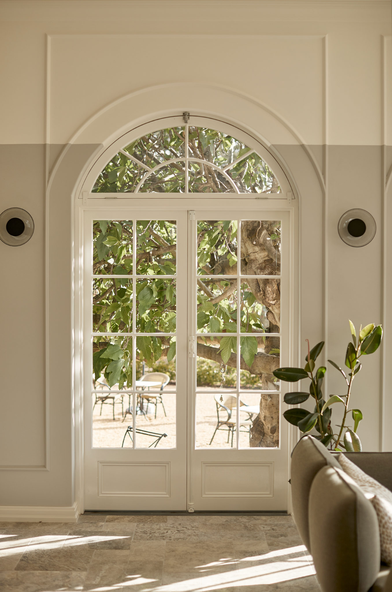 Arched French Conservatory Window looking out at 160 year old Fig Tree